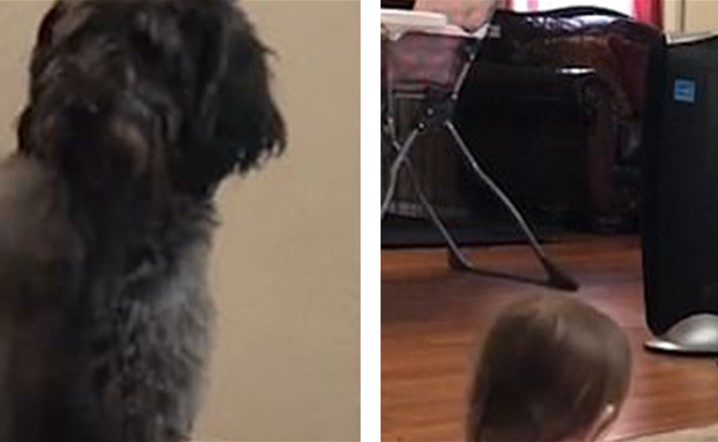 Hilarious moment Khloe the Labradoodle shows toddler girl who's the boss