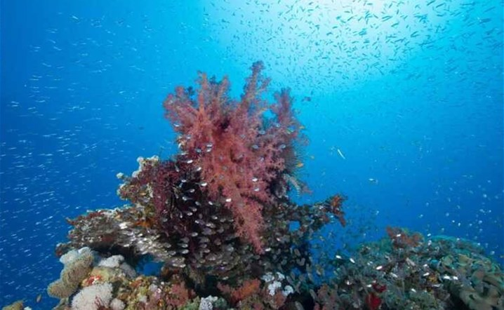 Hidden treasures in Saudi Arabia in the fourth largest coral reef in the world