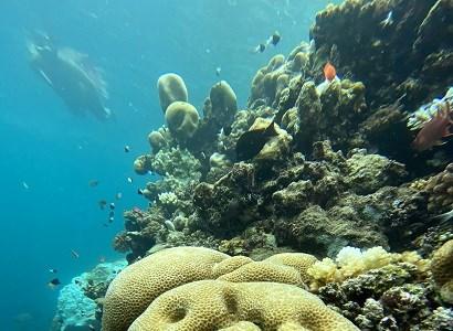 Snorkeling Trip~NoOnline~