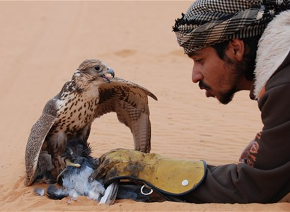 Falconry. The Old Arabian way!