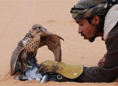 استمتع بمغامرة الصيد بالصقور بالطرق العربية الأصيلة