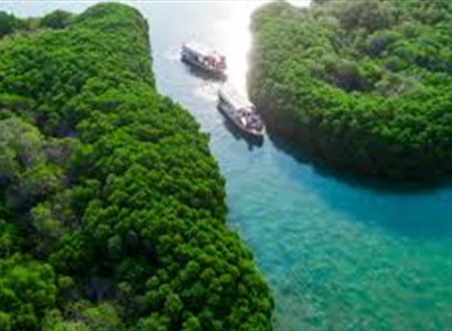 The Utter Beauty of Farasan Islands (Three Day Trip)